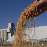 Grain Siloes